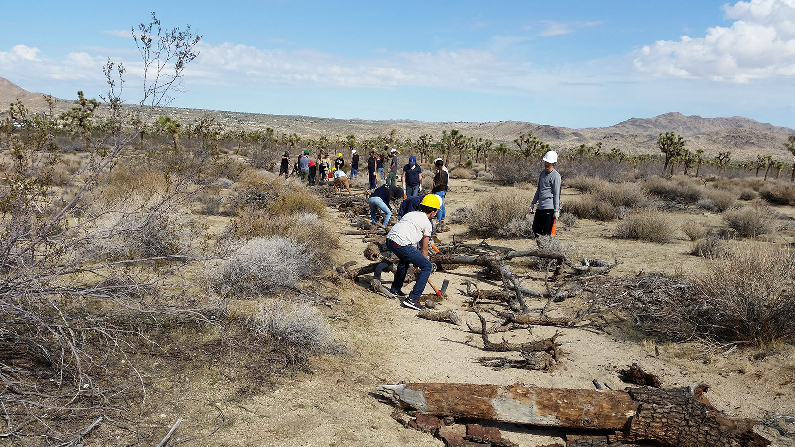 Service Learning Joshua Tree