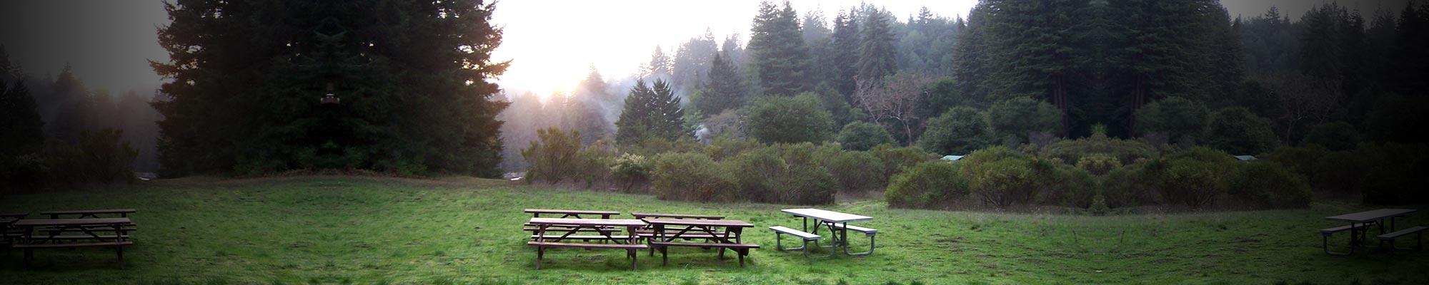 RedwoodGlen